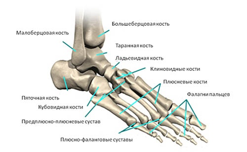 Кости стопы 2
